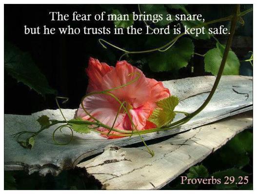 PROVERBS 29.25