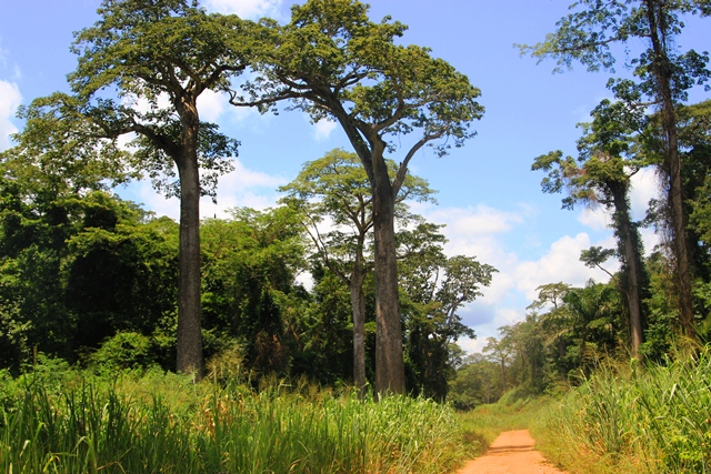 angola forest-road