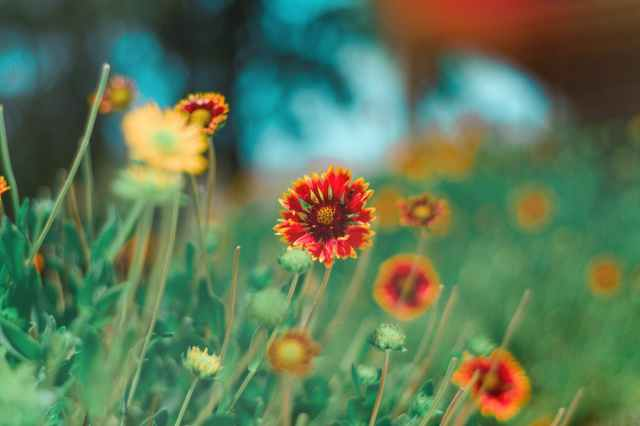 selective focus photography of red and yellow petaled flower